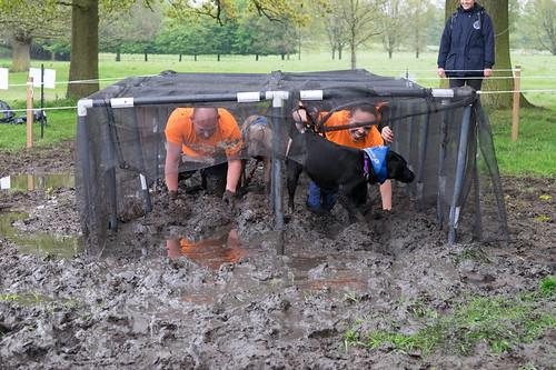 Battersea Dog Home Vet Salary