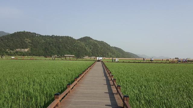 Suncheon Bay Wetland (22)