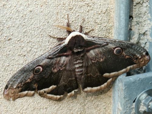fil(et) à papillons - Page 11 34682382441_b7fc164581