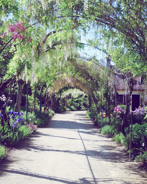 Jardin floral d'Apremont sur Allier (18)