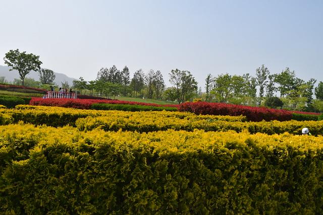 Suncheon Bay National Garden (17)