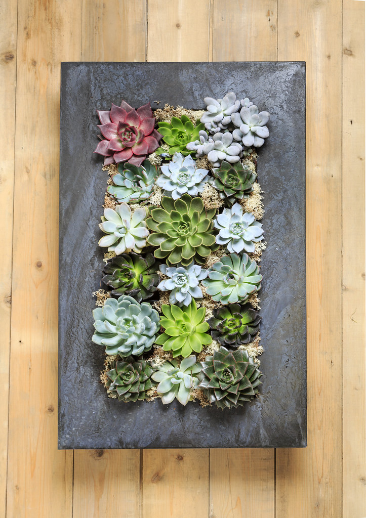 ... Grand Living Wall Succulent Planter | By Urbanbotanist
