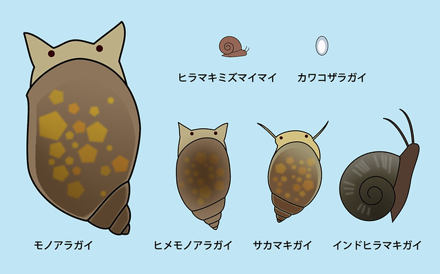 モノアラガイ ヒメモノアラガイ サカマキガイ インドヒラマキガイヒラマキミズマイマイ カワコザラガイ スネールの種類