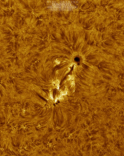SunSpot_HA_Colored_06152017 | by Mwise1023