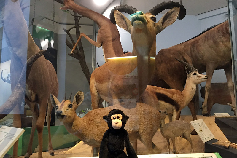 Monkey with mammals