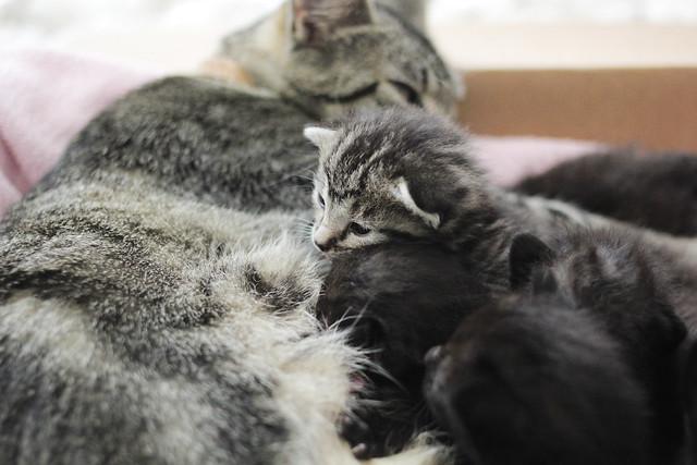 Kittens June
