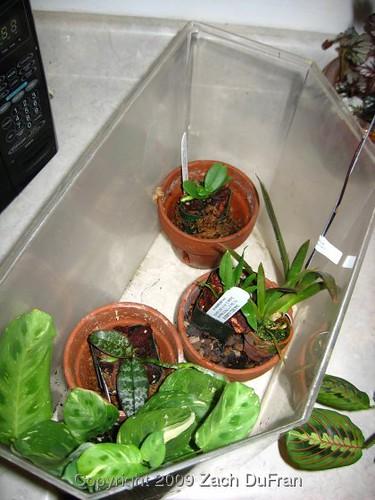 orchidarium_20090511
