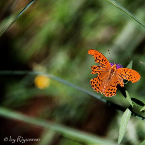 A butterfly always flies