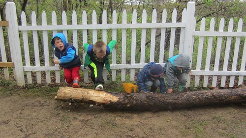 moving the log to search for worms