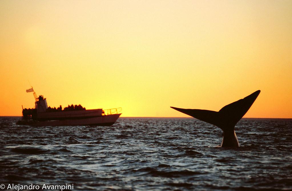 Avistajes de ballenas Peninsula Valdes
