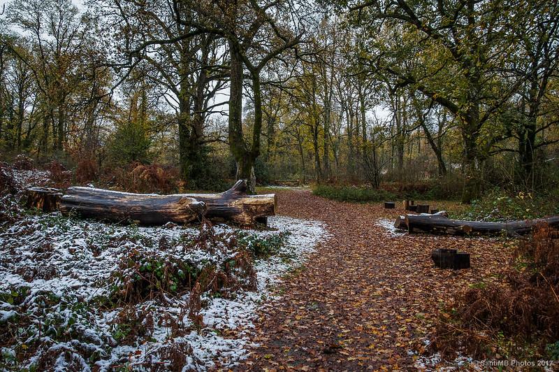 Por el camino del Bosque de Orgi