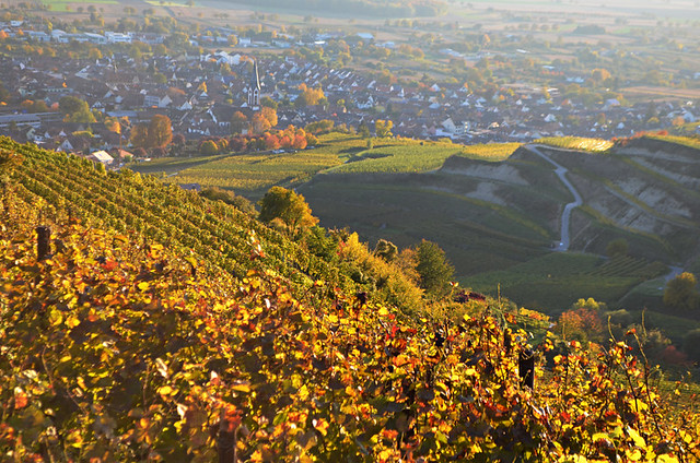 Vineyard, Kaiserstuhl, Germany