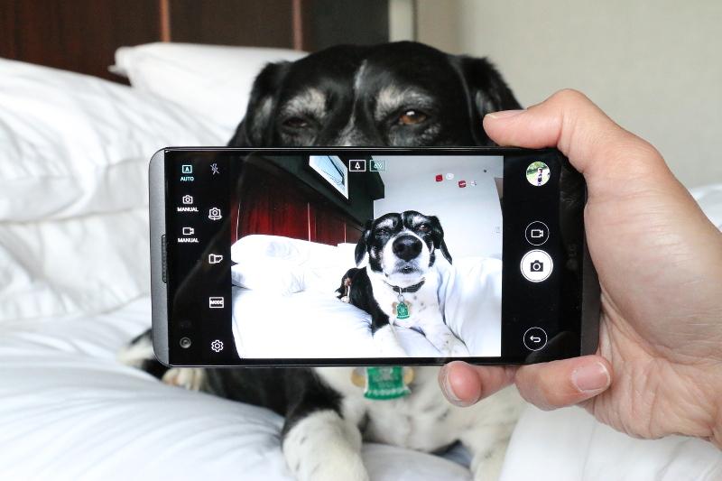 lg-v20-smartphone-camera-dog-5