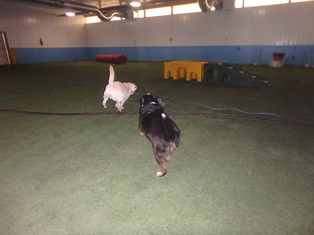 06/11/17 Frisbee/Tennis Ball Play :D