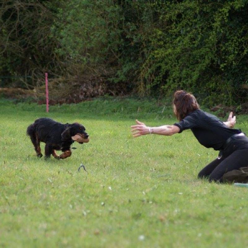 Zip's Dog School - Dog Training
