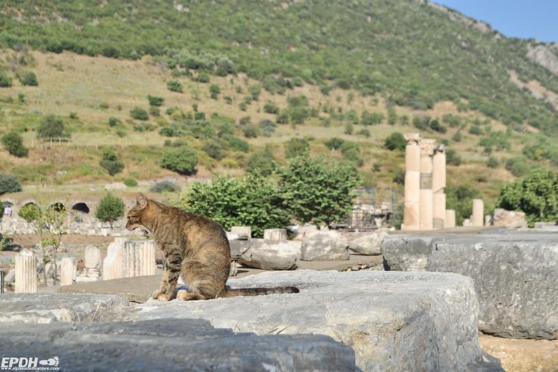 calor en Éfeso