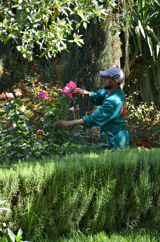 marrakech may 2017 green gardens workshop