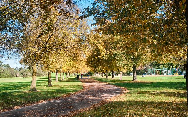 Autumn Afternoon :: Jells park