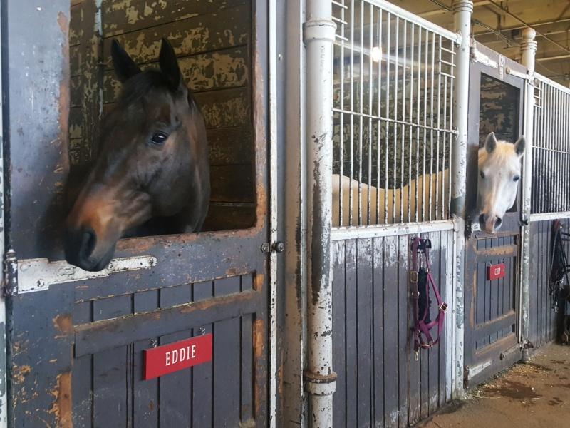 horse riding academy