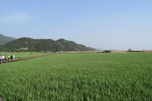 Suncheon Bay Wetland (7)