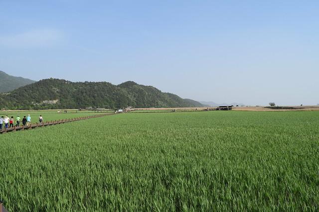 Suncheon Bay Wetland (7)