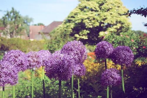 Jardin floral d'Apremont sur Allier (13)