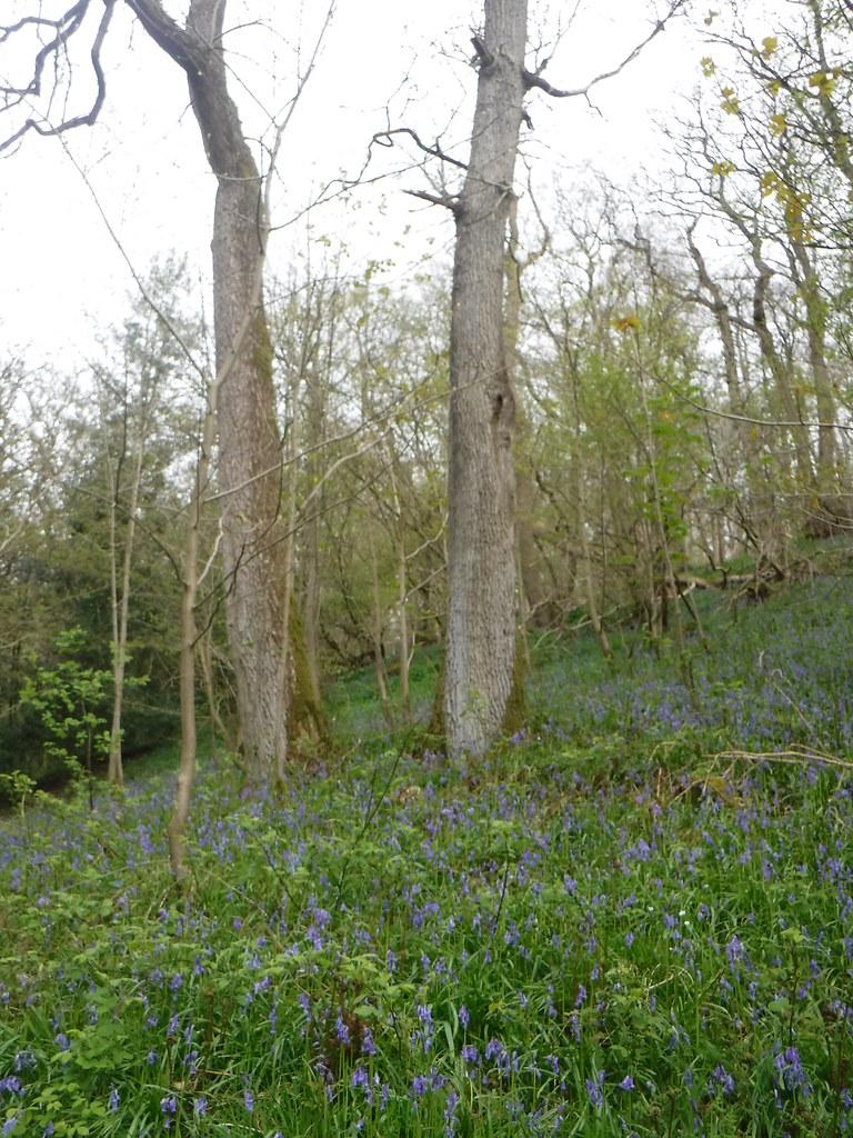 Strid Wood 7