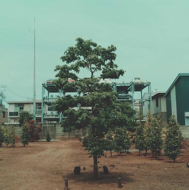 Short trees
