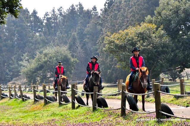 Horseback Riding Jeju Island