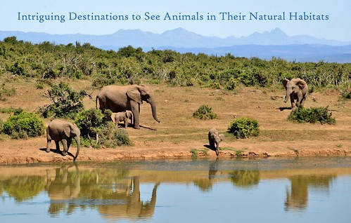 5 Intriguing Destinations to See Animals in Their Natural Habitats