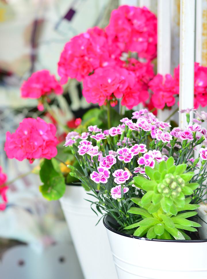 flowers_vanillasky