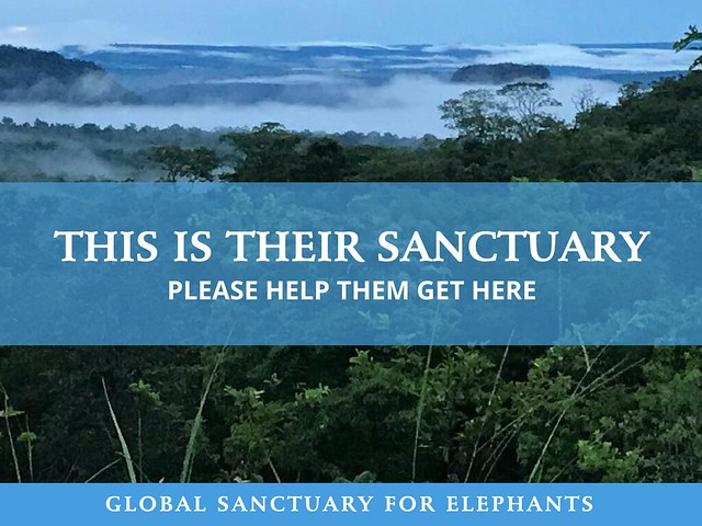 B4G sanctuary