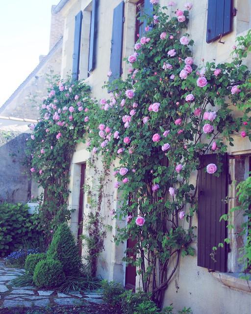 Jardin floral d'Apremont sur Allier (21)