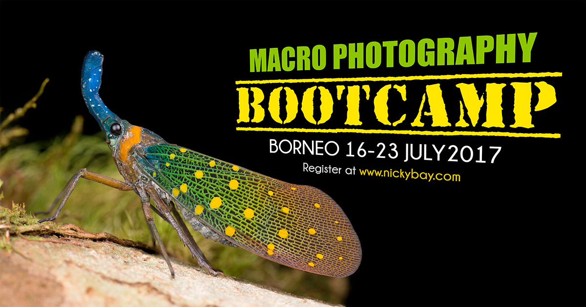 Macro Photography Bootcamp Borneo 2017