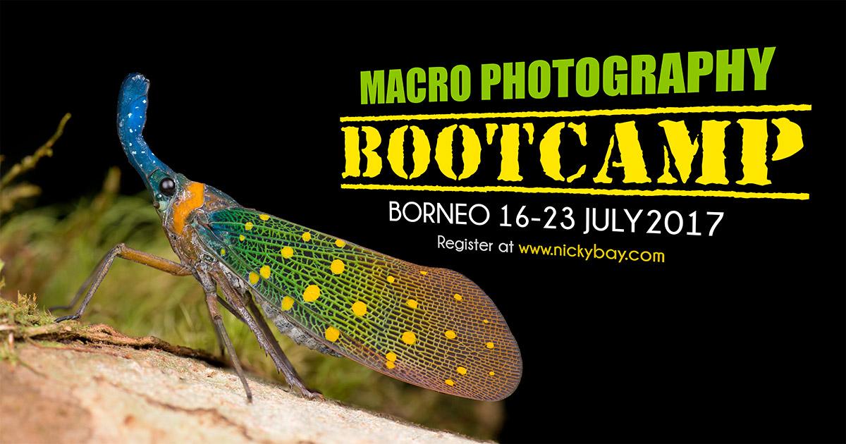 Macro Photography Bootcamp Borneo 2017
