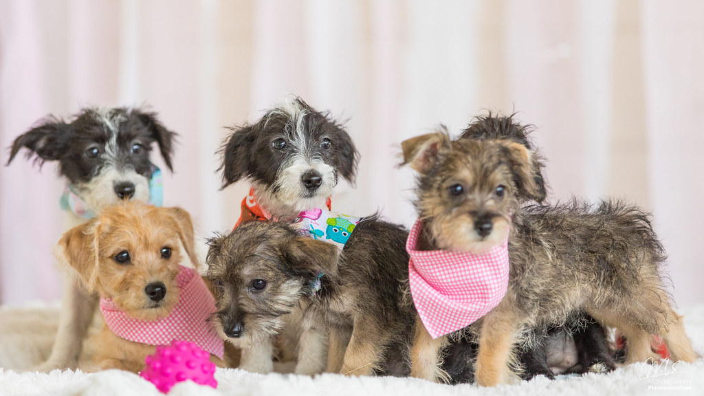Homes With Dog Kennls For Sale In Massachusetts