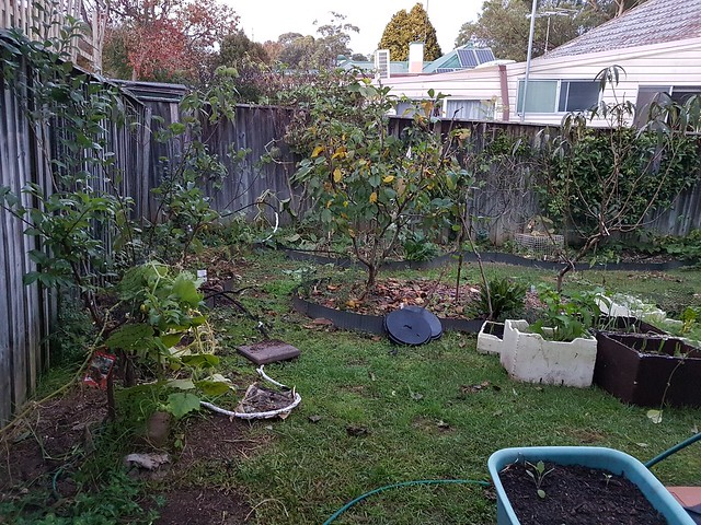Garden May 2017
