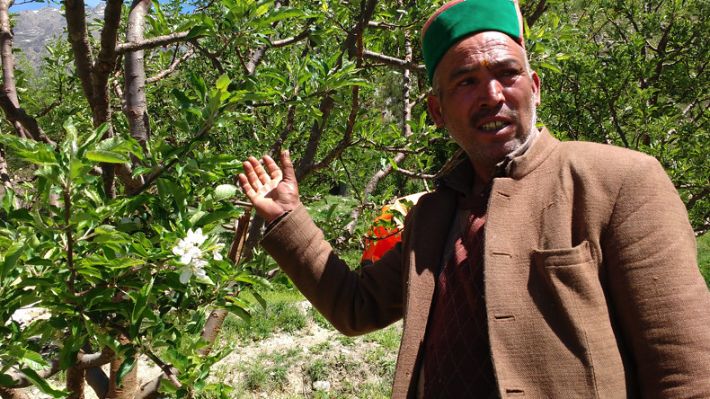A farmer showing his apple trees.