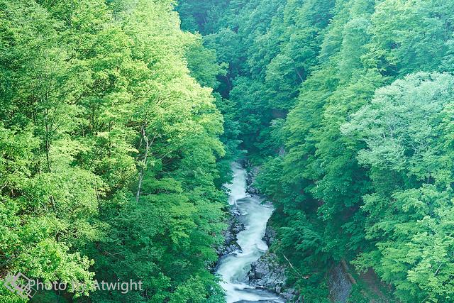 Green in a ravine