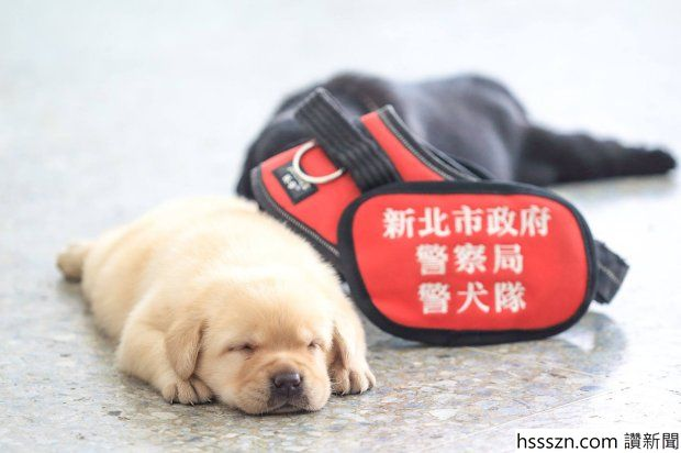 Adorable Police Academy Pups Melt Hearts
