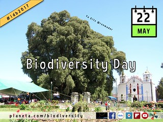 Celebrating Biodiversity Day on the Social Web. Live web tour at 10am Pacific. #BioDiversityDay #IDB2017