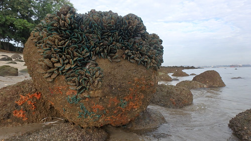 Living rocky shores of Punggol