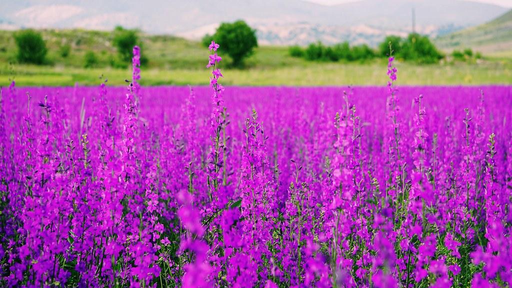 Purple (opportunistic) flower