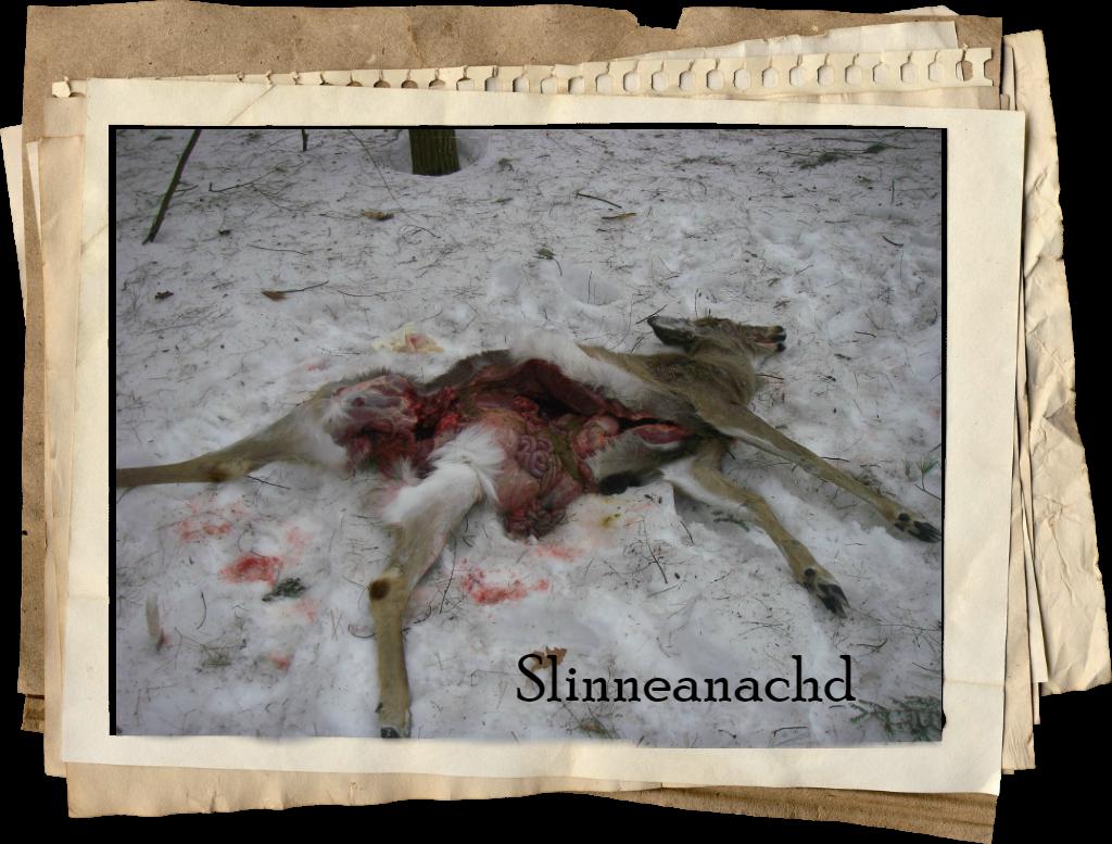slinneanachd