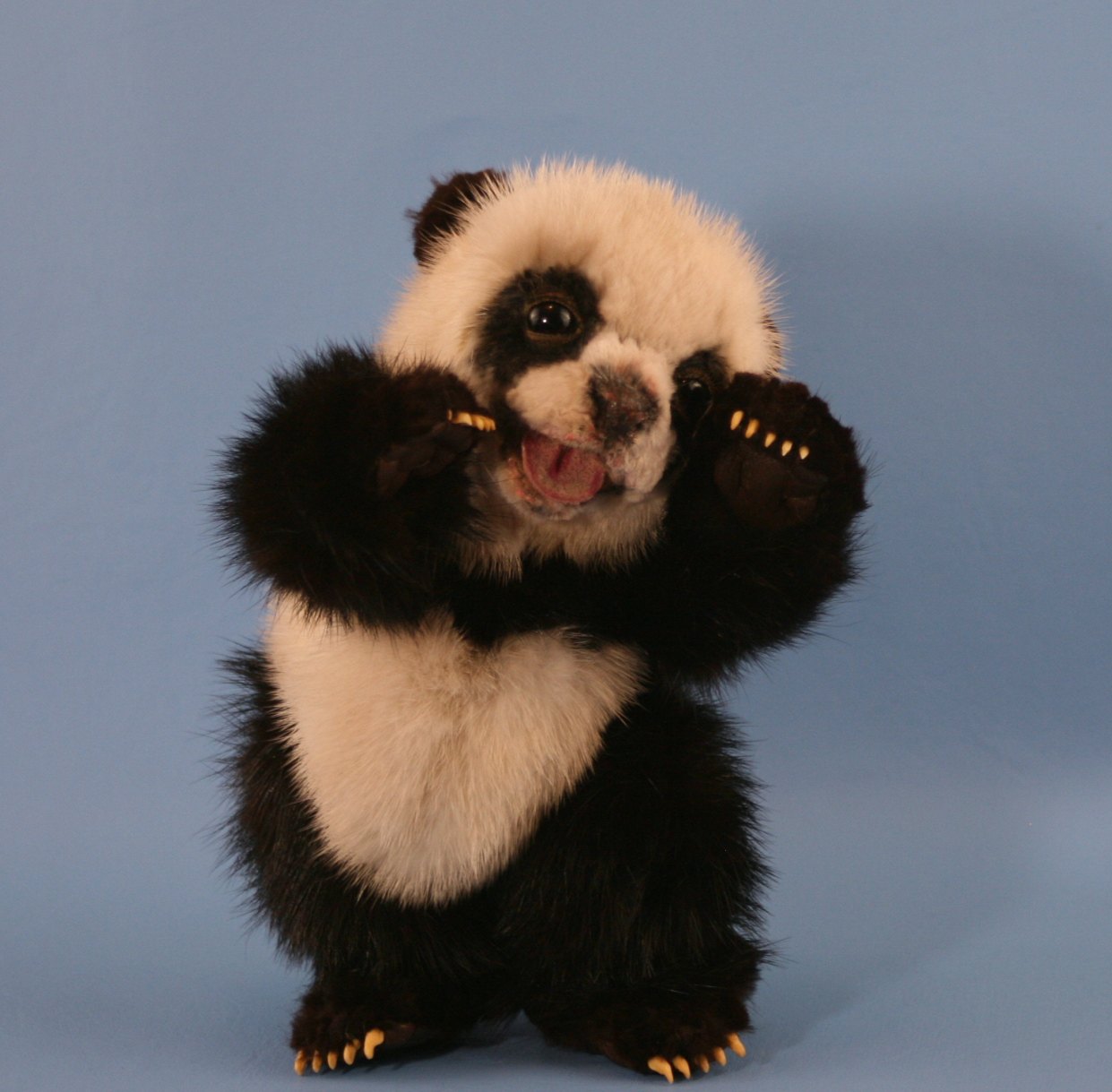 These 21 Extremely Cute Pictures of Pandas Will make your Day  These 21 Extrem...