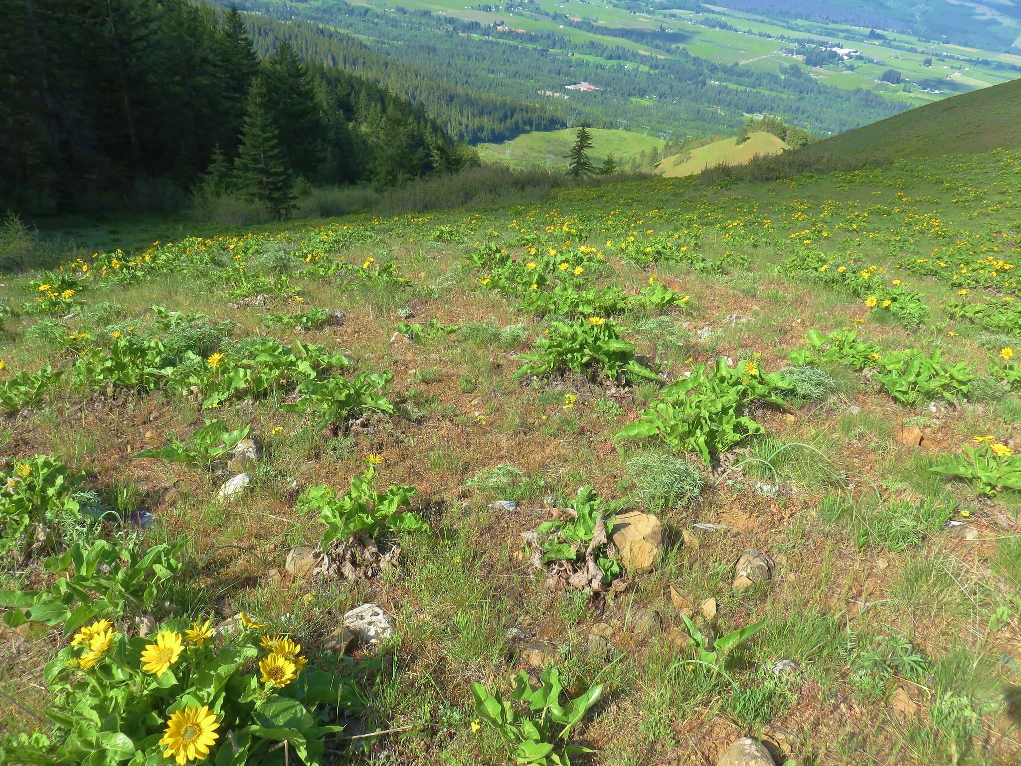 Wildflowers on Bald Butte