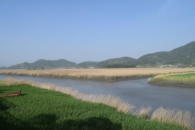 Suncheon Bay Wetland (5)