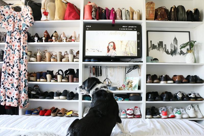shoes-accessories-closet-shelves-louis-beagle-dog-20