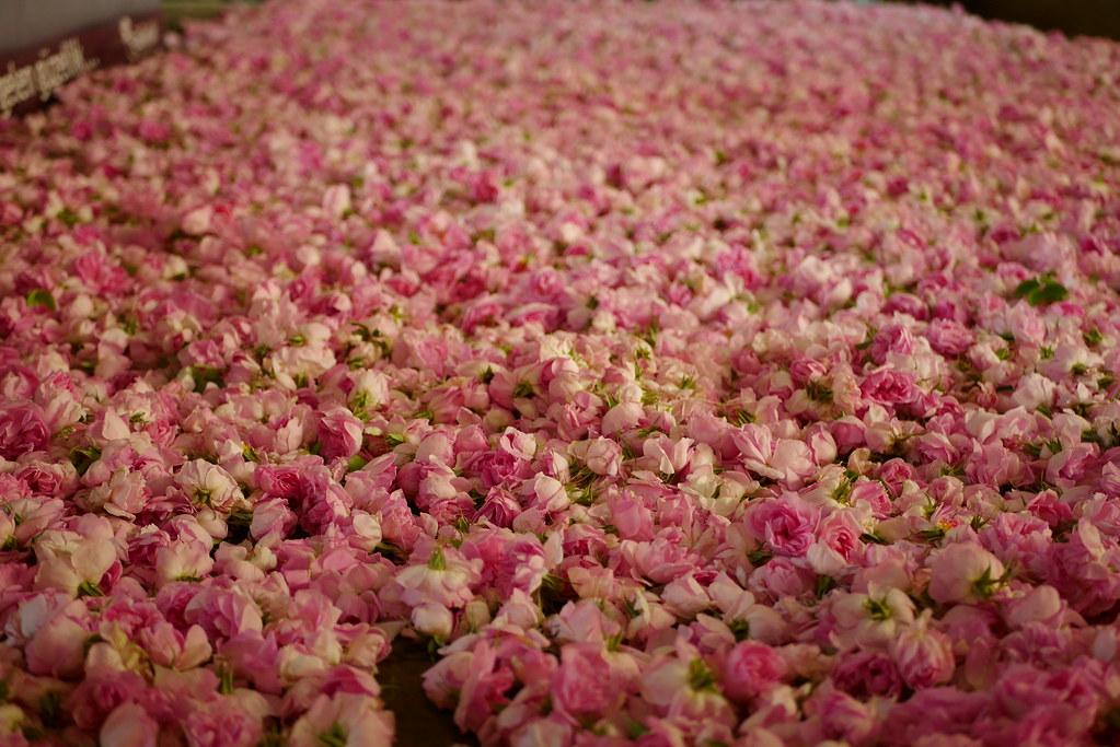 Isparta玫瑰花們
