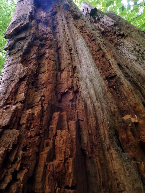 Eilenriede: Wood Textures